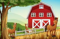 Paarden bij het landbouwbedrijf dichtbij rode barnhouse Royalty-vrije Stock Fotografie