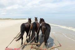 Paarden bij het strand Royalty-vrije Stock Foto