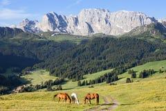 Paarden bij hooggebergteweide Royalty-vrije Stock Fotografie