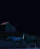 Paarden bij nacht Royalty-vrije Stock Foto