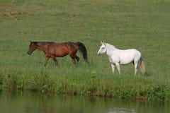 Paarden bij Oever van het meer Royalty-vrije Stock Afbeeldingen