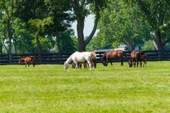 Paarden bij paardlandbouwbedrijf Het landschap van het land royalty-vrije stock fotografie