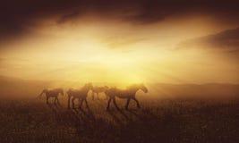 Paarden bij schemer royalty-vrije stock afbeelding