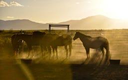 Paarden bij schemer Royalty-vrije Stock Fotografie