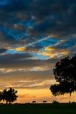 Paarden bij zonsondergang royalty-vrije stock fotografie