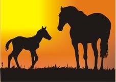 Paarden bij zonsondergang Stock Foto