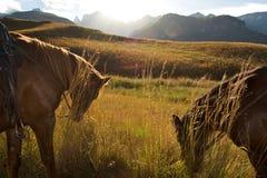 Paarden bij zonsondergang, Zuid-Afrika Royalty-vrije Stock Fotografie