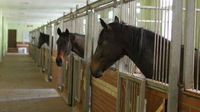 Paarden in binnenlandse stal, stock footage