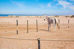 Paarden in box Royalty-vrije Stock Foto's