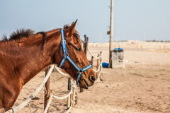 Paarden in box Royalty-vrije Stock Foto