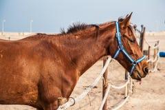 Paarden in box Stock Afbeelding