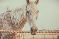 Paarden in box Stock Afbeeldingen