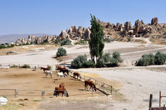 Paarden in Cappadocia stock afbeeldingen