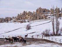 Paarden in Cappadocia Stock Afbeelding