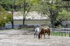 Paarden in Corral Royalty-vrije Stock Fotografie