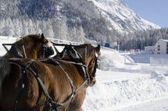 Paarden in de alpen van Zwitserland Stock Foto