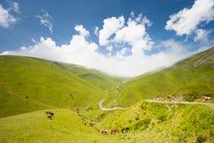 Paarden in de Berg royalty-vrije stock fotografie