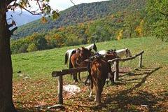 Paarden in de bergen Royalty-vrije Stock Afbeelding