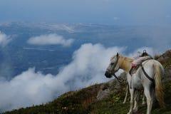 Paarden in de bergen royalty-vrije stock afbeeldingen
