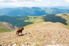 Paarden in de bergen van de Pyreneeën, Spanje Stock Afbeeldingen