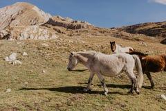Paarden in de bergen van Montenegro royalty-vrije stock afbeelding