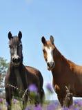Paarden in de bloemen Royalty-vrije Stock Afbeelding