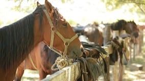 Paarden in de box stock footage