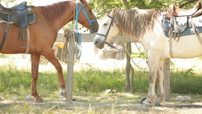 Paarden in de box stock videobeelden