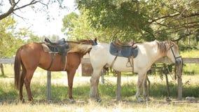 Paarden in de box stock video