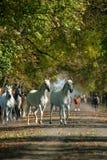 Paarden in de herfst Royalty-vrije Stock Afbeeldingen
