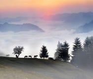 Paarden in de mist Royalty-vrije Stock Fotografie