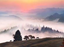 Paarden in de mist Royalty-vrije Stock Foto