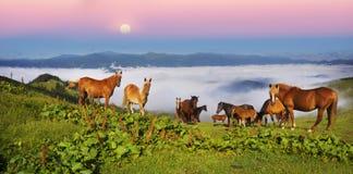 Paarden in de mistige Karpaten stock afbeelding