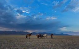 Paarden in de paarden steppe royalty-vrije stock afbeeldingen