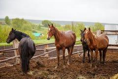 Paarden in de regen royalty-vrije stock foto's