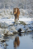 Paarden in de sneeuw Stock Fotografie