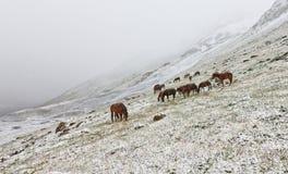 Paarden in de sneeuw Royalty-vrije Stock Afbeeldingen