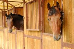 Paarden in de stal Royalty-vrije Stock Foto's