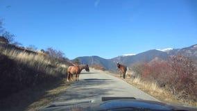 Paarden in de wildernis stock videobeelden