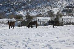 Paarden in de wintertijd royalty-vrije stock afbeelding