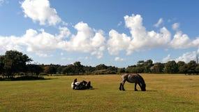 Paarden in de zomer Stock Fotografie
