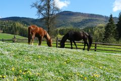 Paarden in de zonneschijn stock foto