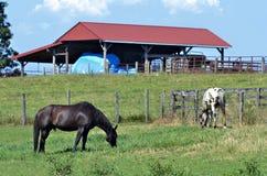 Paarden die bij Schuur weiden Stock Afbeeldingen