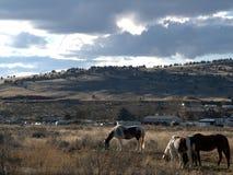 Paarden die buiten Brandwonden, Oregon weiden stock afbeeldingen