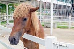 Paarden die camera onderzoeken Stock Foto
