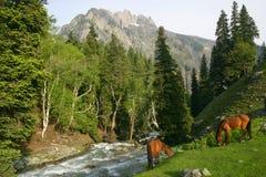 Paarden die in de bergen weiden Royalty-vrije Stock Foto's