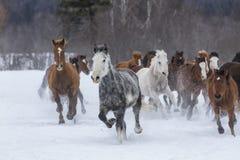 Paarden die in de sneeuw lopen Stock Foto