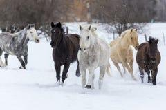 Paarden die in de sneeuw lopen Royalty-vrije Stock Foto