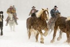Paarden die in de sneeuw lopen Stock Afbeeldingen
