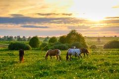Paarden die in de weide bij zonsondergang weiden stock foto's